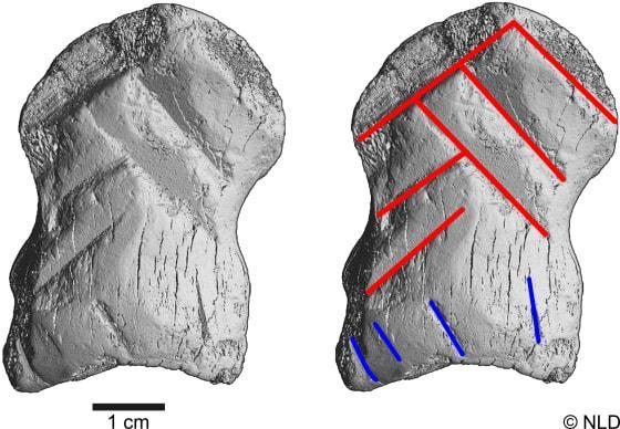Gravures neandertal1
