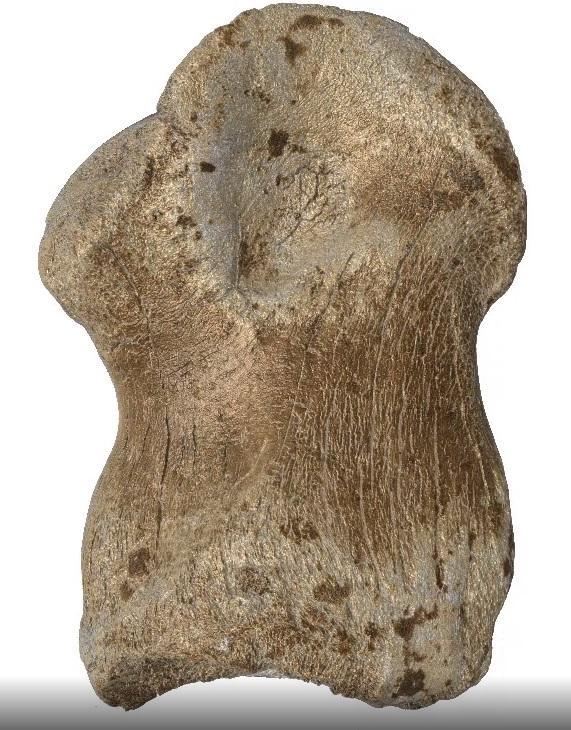 Gravures neandertal4