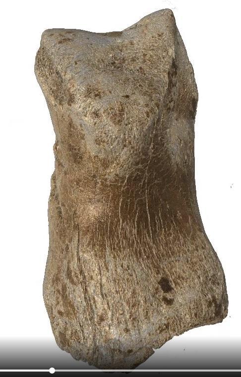 Gravures neandertal5
