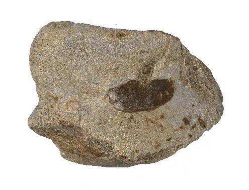 Gravures neandertal9