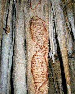 Grotte nerja phoques art parietal