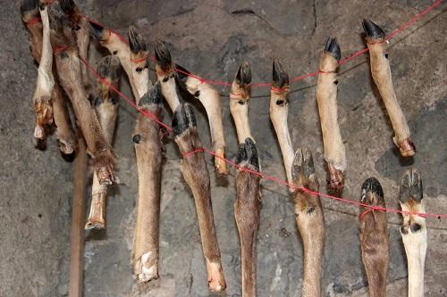 Grotteqesem israel0 mini
