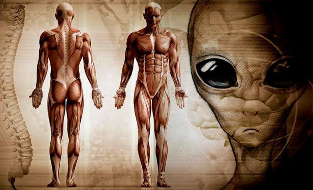 Homo gris