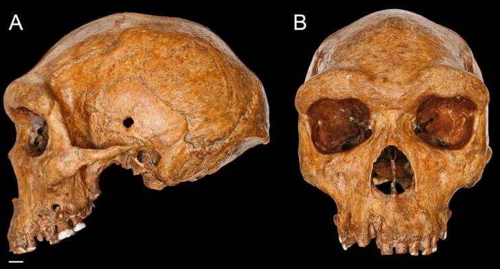 Homo heidelbergensi1