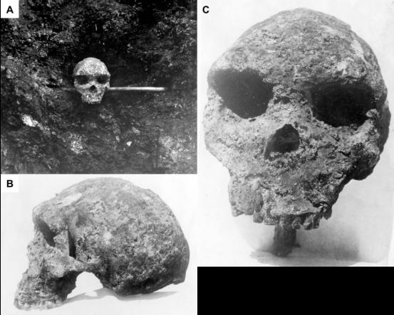 Homo heidelbergensi2