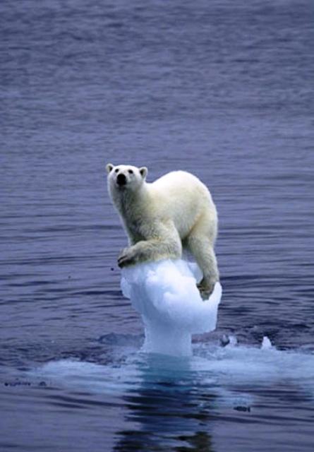 la-fonte-totale-du-pole-nord.jpg
