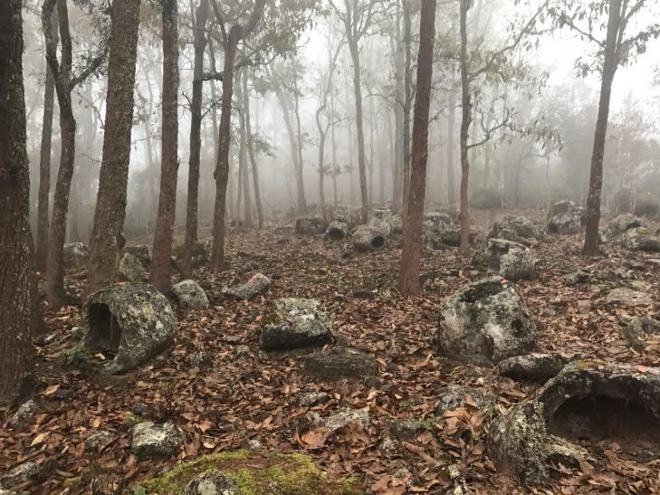Laos jars forest 1400
