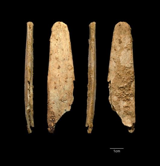 lissoirs-os-neandertal-projets-abri-peyrony-et-pech-de-l-aze.jpg