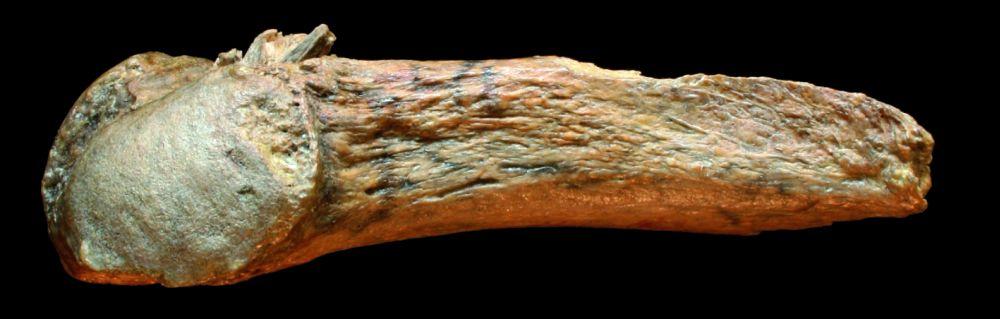mastodonte-avec-la-pointe-de-fleche.jpg