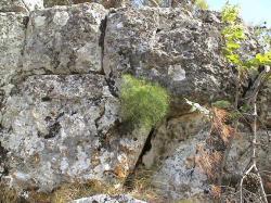 Meduna meteon podgorica mont n gro3