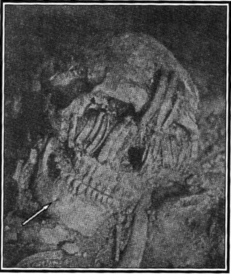 Neandertal en amerique