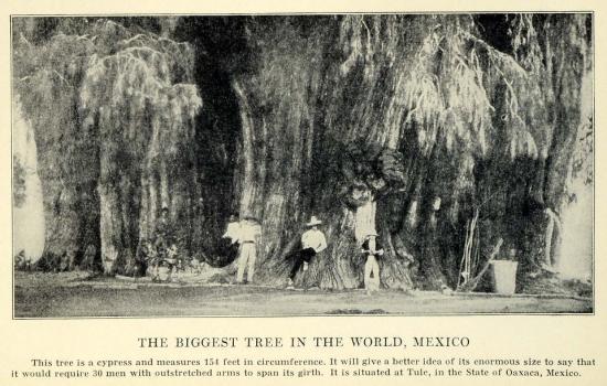 mexique-arbredevie.jpg