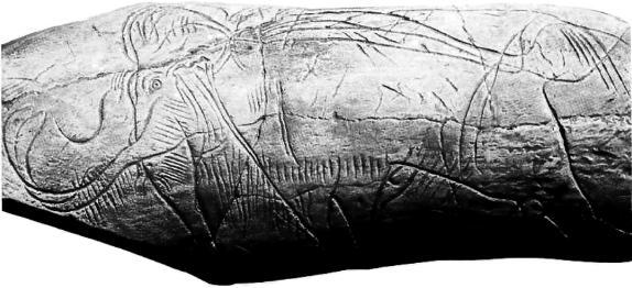 Moulinquignon 10 defense de mammouth gravee de la madeleine lartet et christie 1864