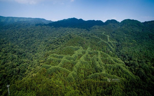 Mysterious pattern forest china 4
