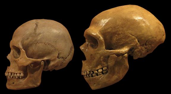 Neanderthal homosapiens