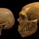 Néandertalien utilisait des cure-dents !