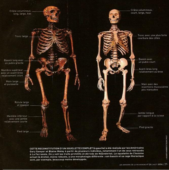 Neanderthalsapiens2