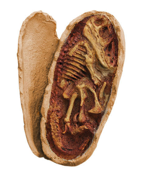Oeufvelociraptor embryon