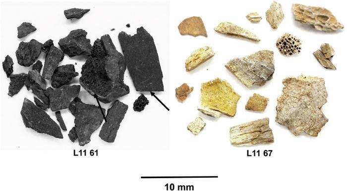 Osbrules paleolithique abripataud dordogne