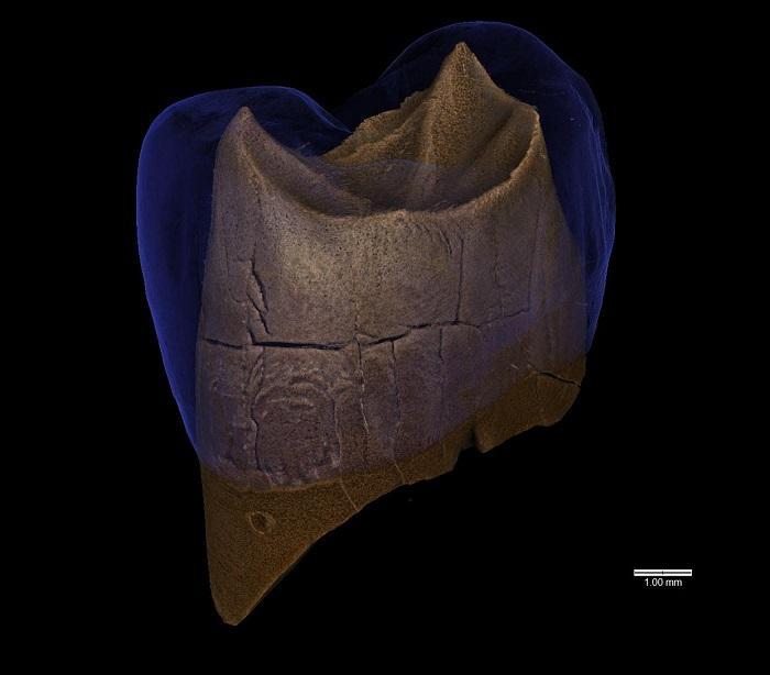 Pologne dentneandertalien1