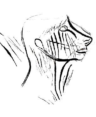 profil-humain-grotte-de-la-marche.jpg