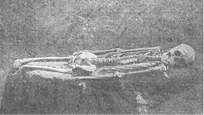 Serpent skeleton