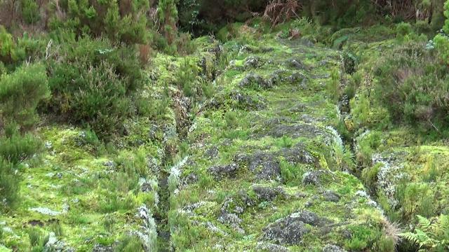Açores-Terceira-YH