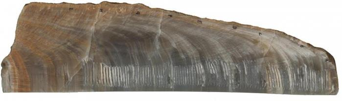 Stalagmites grottehulu chine 14000 55000ans