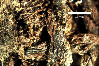 Tissulinegypte