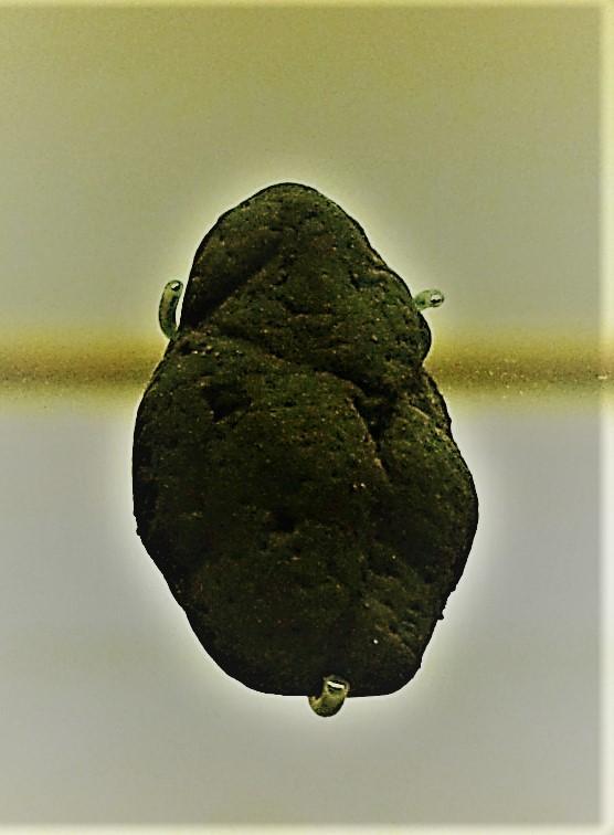 Venus of berekhat ram