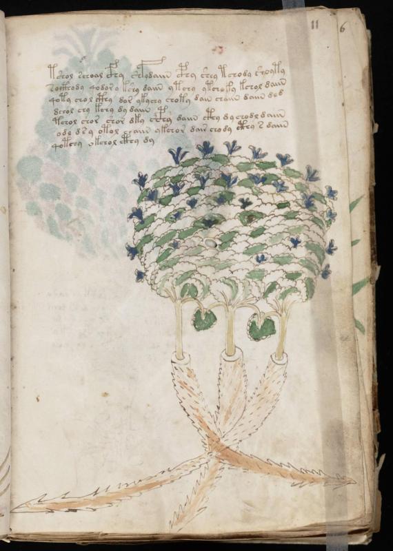 Voynich manuscript 23