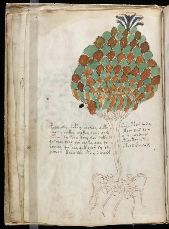Voynich manuscript 24