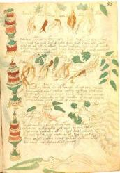 voynich-roots.jpg
