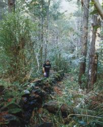 waipoua-forest-stone-city.jpg